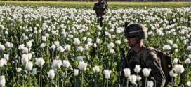 Afghanistan opium trade, Herland Report
