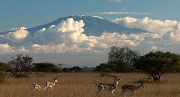 Africa, Huffington Post, Herland Report